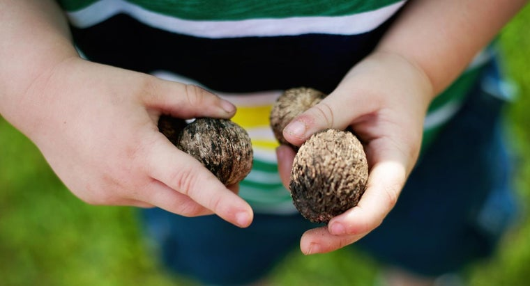 What Are Some Tips for Shelling Black Walnuts?