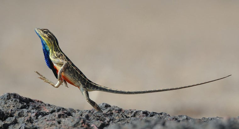 What Are Some Different Types of Lizards?