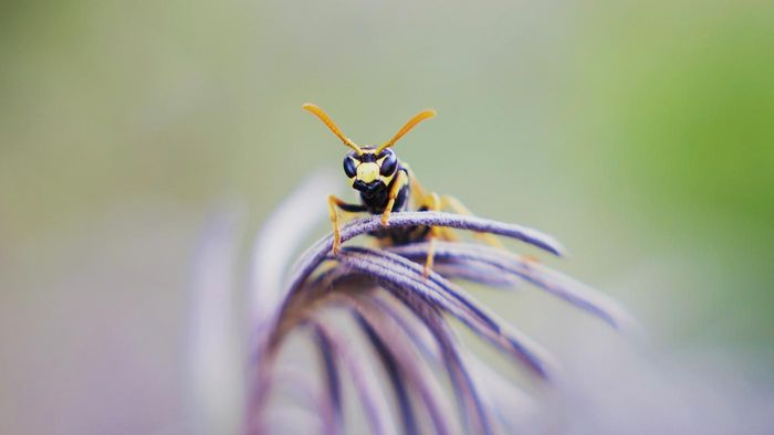What Are Some Good Products for Wasp Sting Pain Relief?