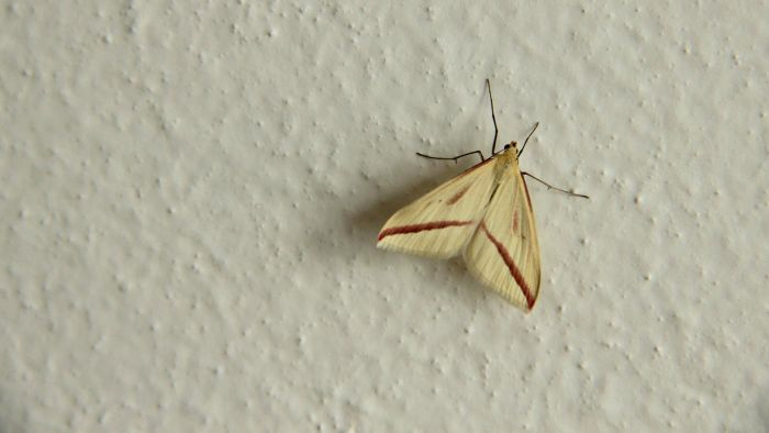 How do you get rid of moths in a house?