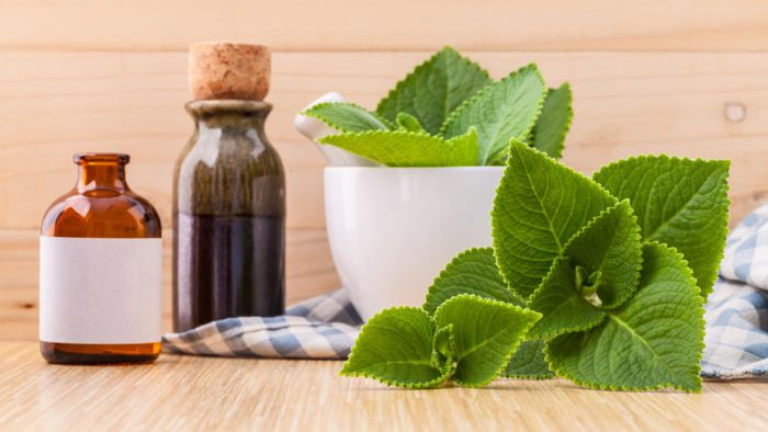 What Is Oregano Oil Good For?