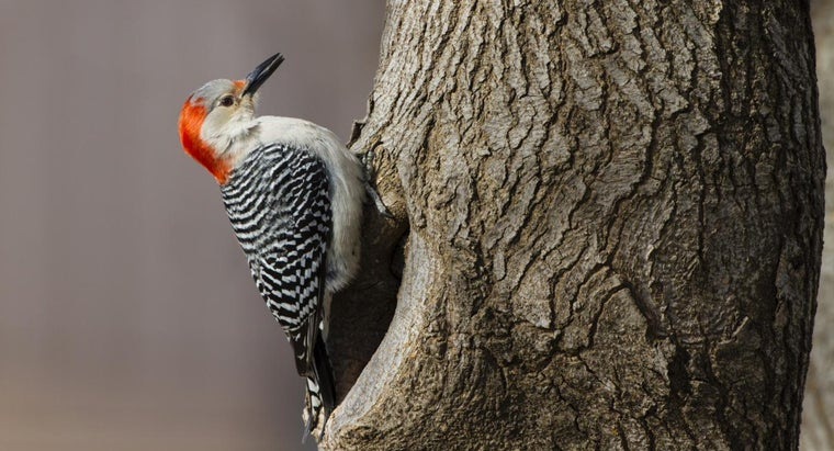 What Is the Best Way to Get Rid of Woodpeckers?