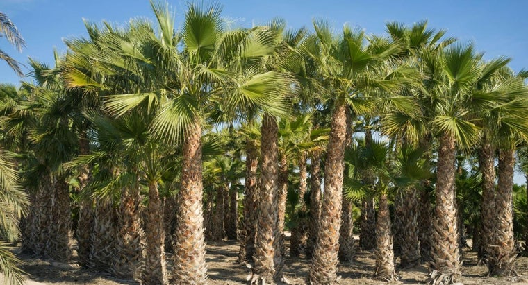 Can You Find Palm Trees Sold in Nurseries?