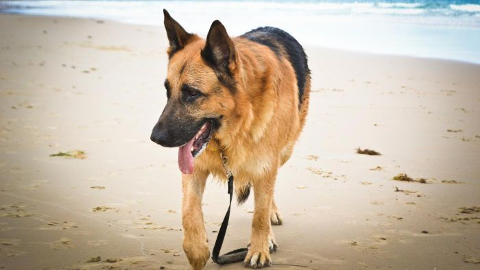What are a some of the top names for German shepherds?