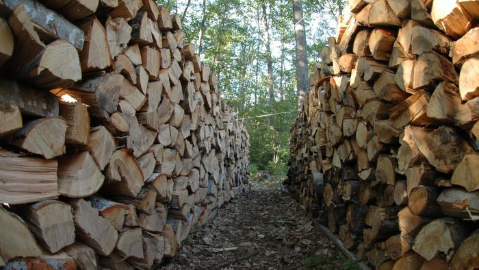How Do You Identify Hardwood Trees for Firewood?