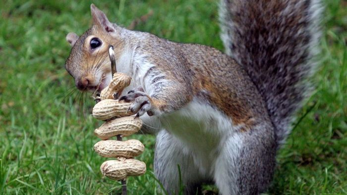 What Are Some Ways to Deter Squirrels?