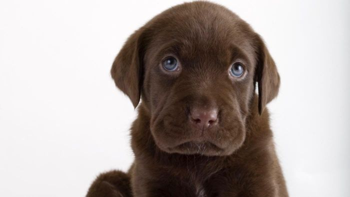 How Do You Treat Diarrhea in a Puppy?