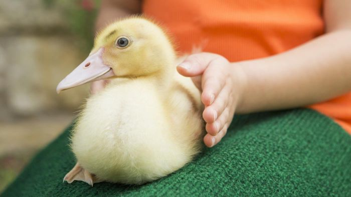 Where Can You Find a List of Top-Rated Animal Welfare Charities?