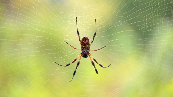 What Are the Telltale Signs on Skin From Spider Bites?