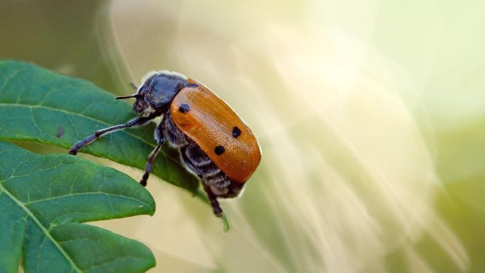 How Do You Identify Common Garden Insects?