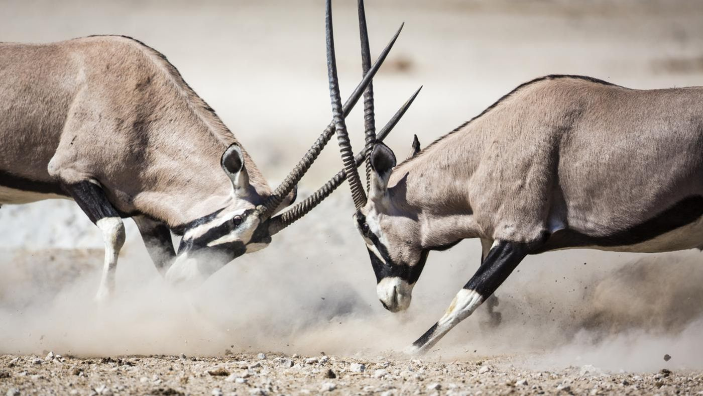 What Is An African Antelope Called Reference Com