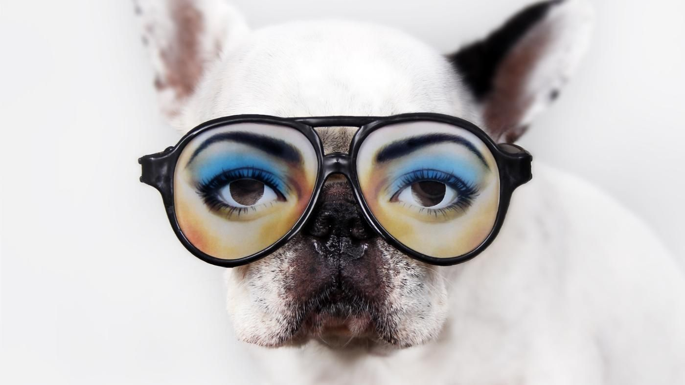 dog with glasses - 900×678