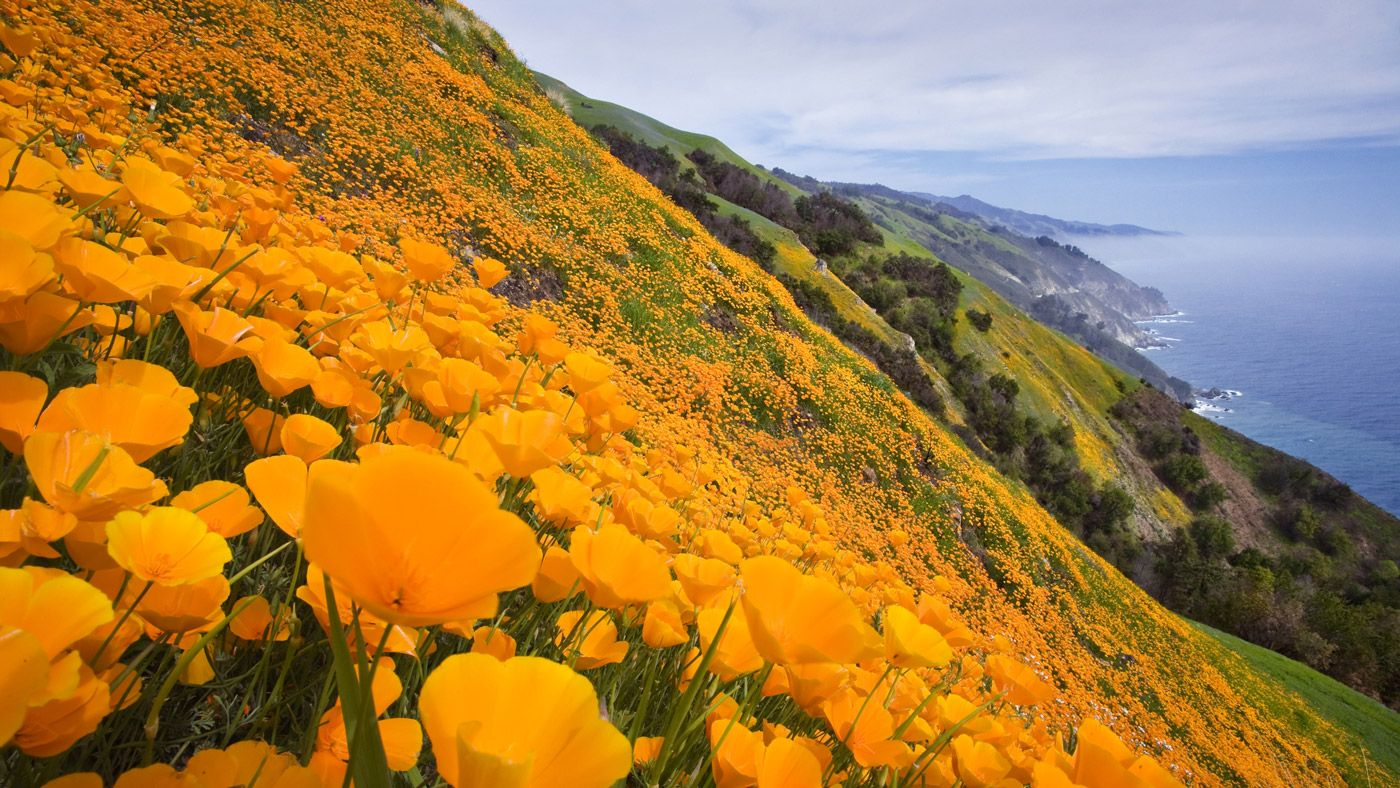 Why Is California Called the Golden State? | Reference.com