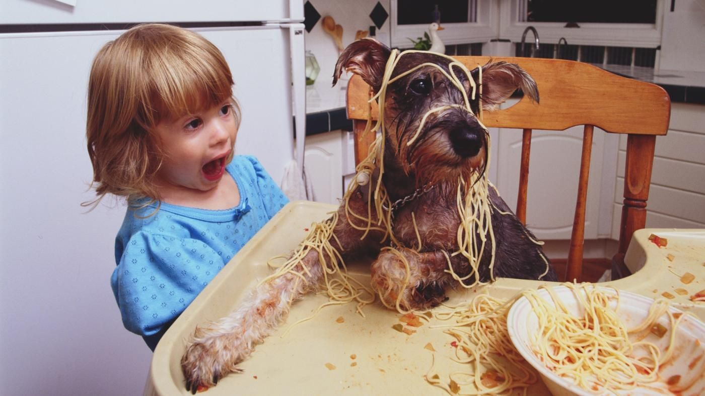 Can A Dog Eat Cooked Pasta