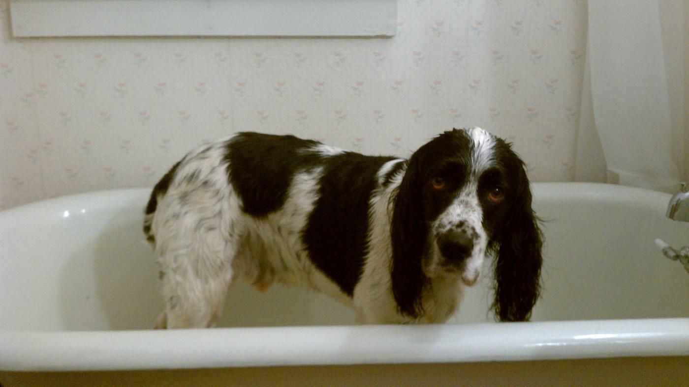 Can Dogs Use Head And Shoulders Shampoo