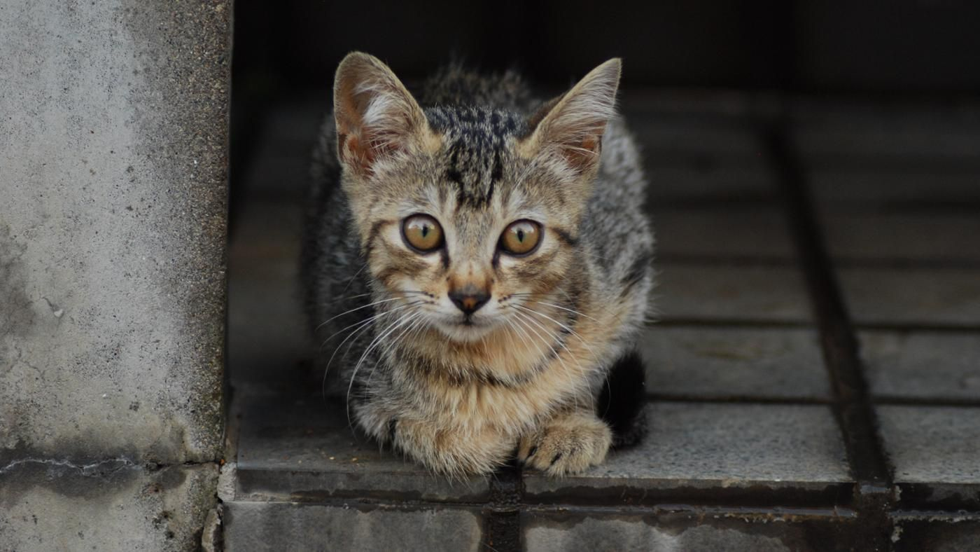 What Do Cats Look Like? | Reference.com