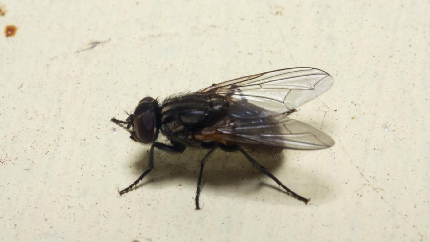 What Causes a House Fly Infestation? | Reference.com