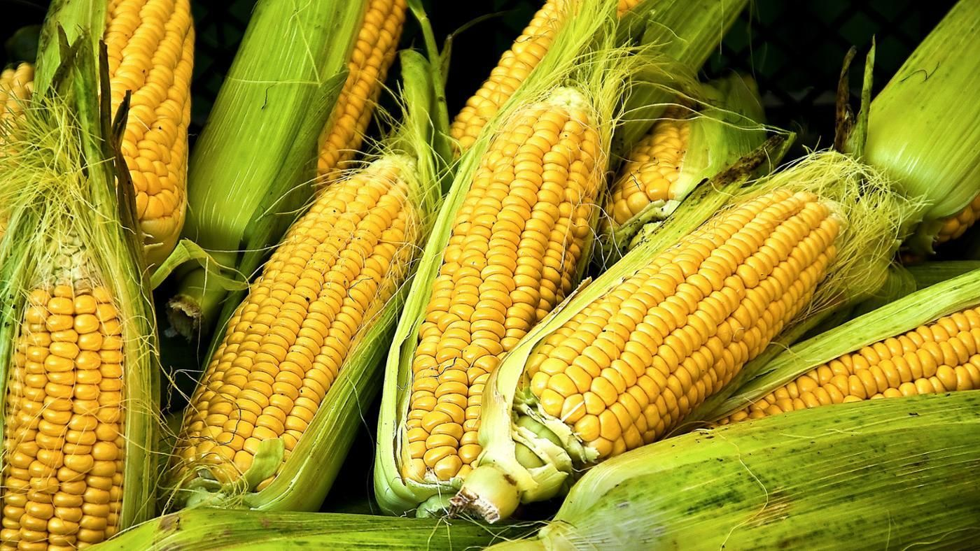 Maize Wallpaper: Is Corn A Starch Or Vegetable?