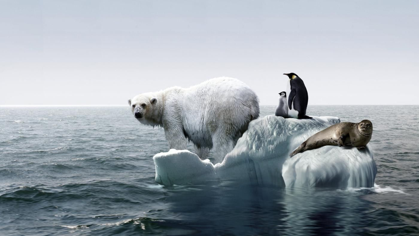 globle warming Global warming is the rise in temperature of the earth's atmosphere it's said that by the time a baby born today is 80 years old, the world will be 6 and a half degrees warmer than it.