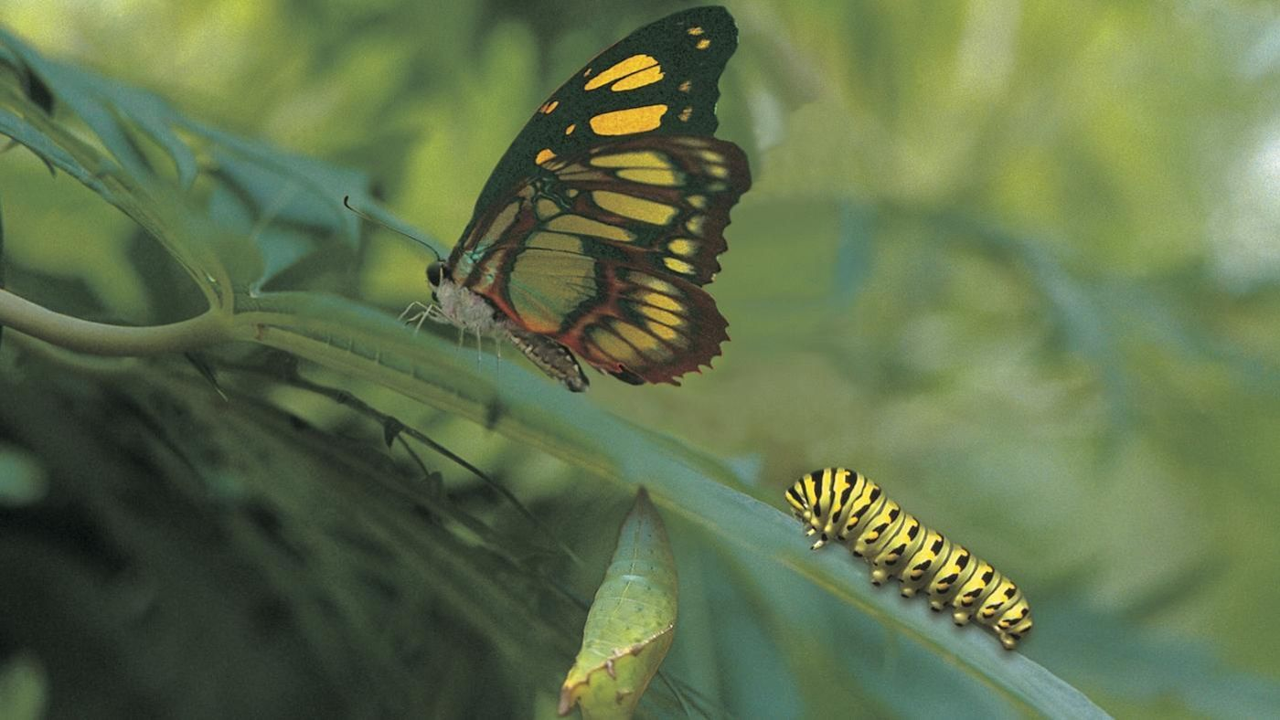 Do All Caterpillars Turn Into Butterflies Reference Com