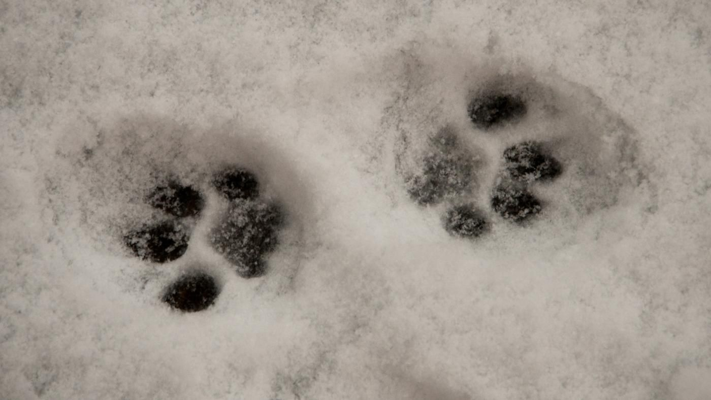 How Do You Draw Cat Paw Prints Reference Com
