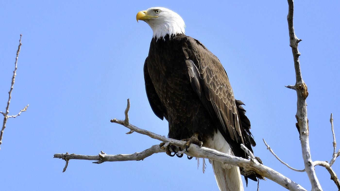 What does the eagle represent reference biocorpaavc Choice Image