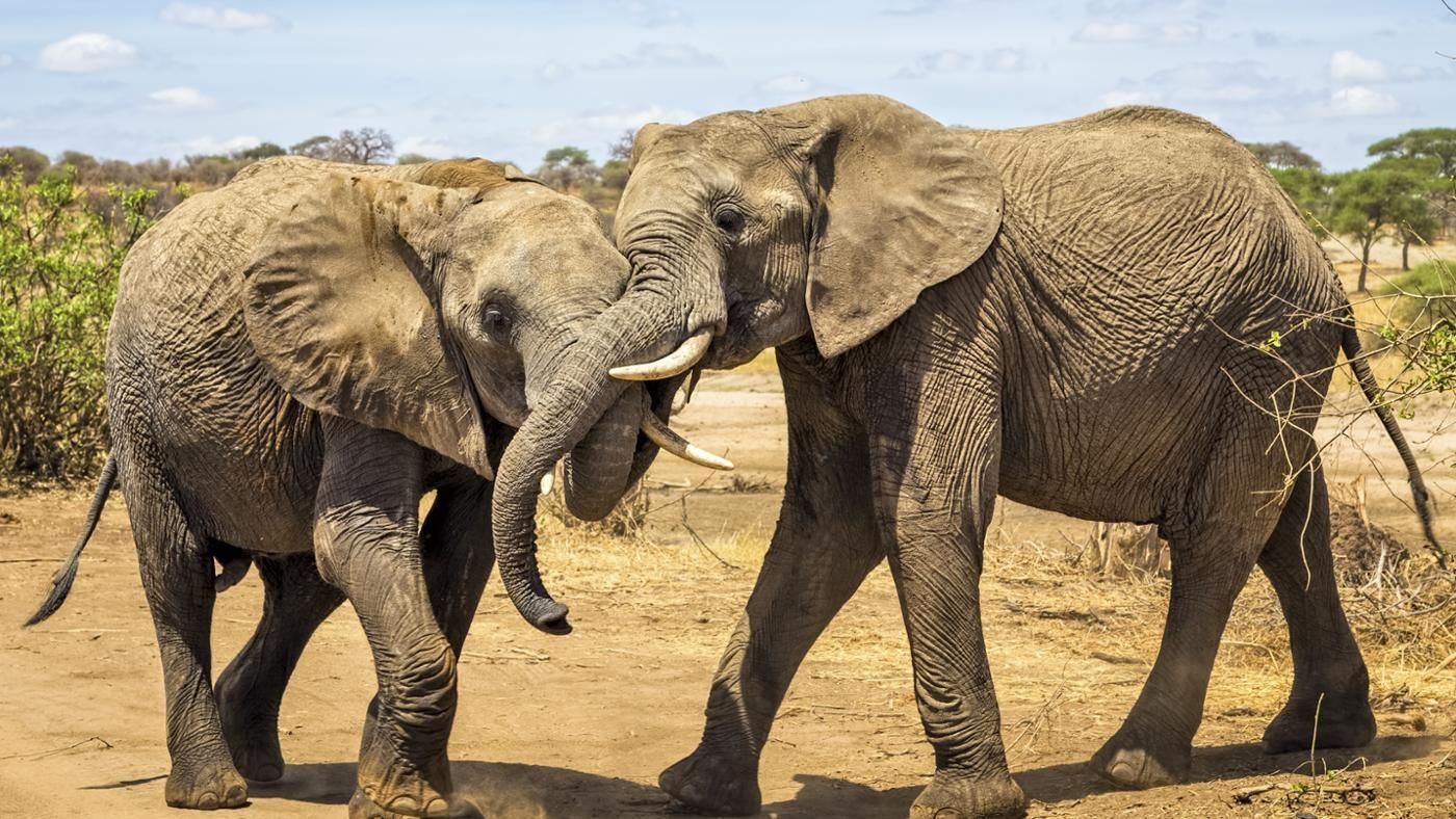 How Do Elephants Mate? | Reference.com