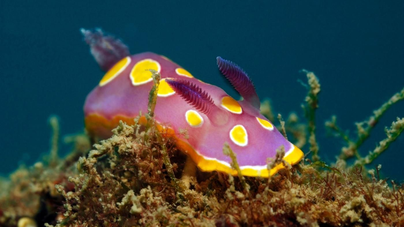 what are examples of ocean decomposers