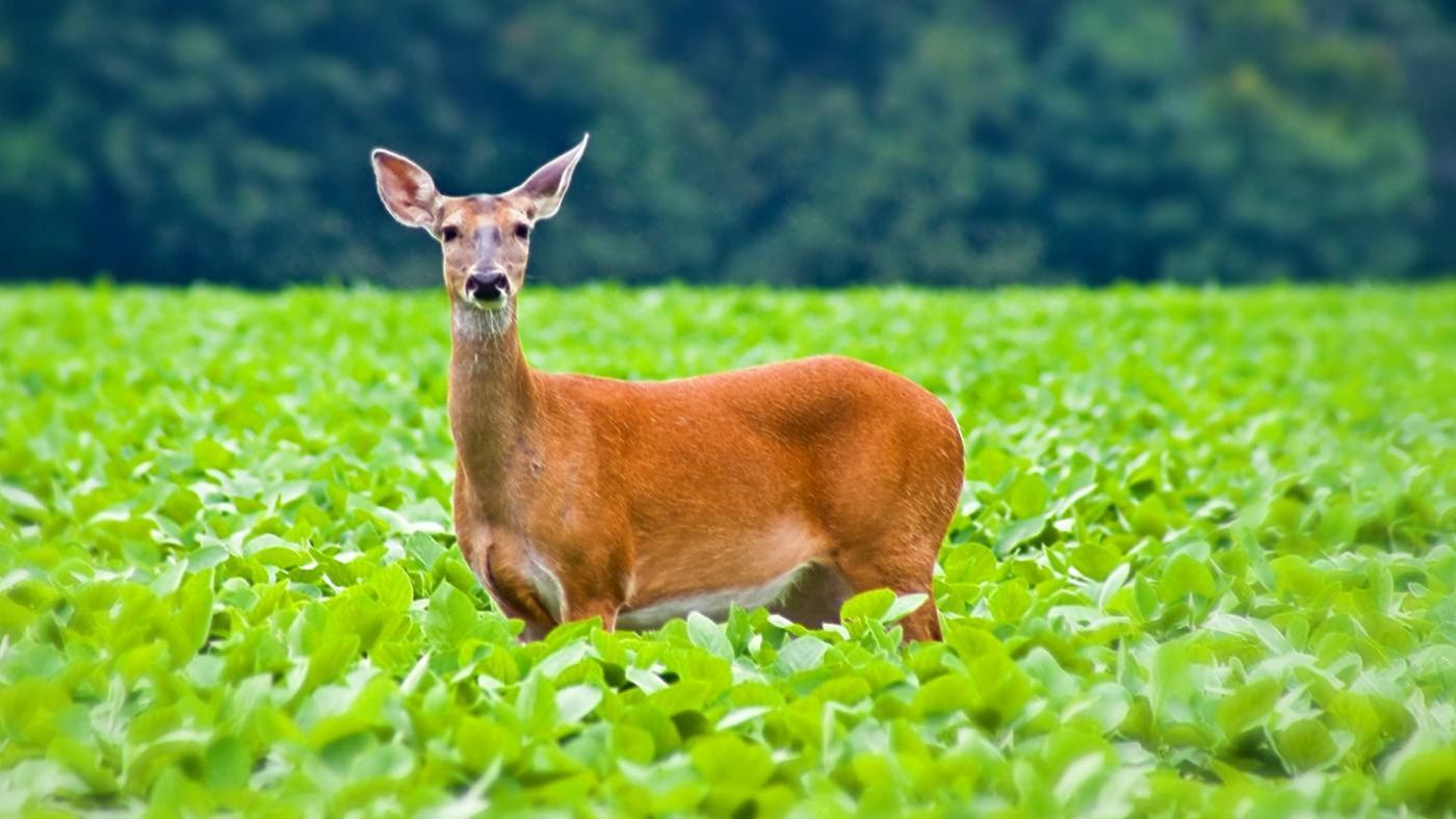 What Is A Female Deer Called Reference Com