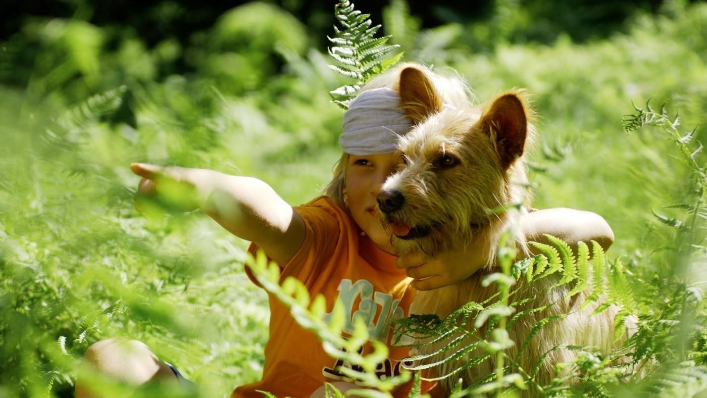 are ferns poisonous to dogs