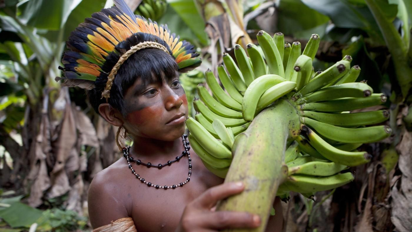 What Fruits Grow in the Amazon Rainforest? | Reference.com