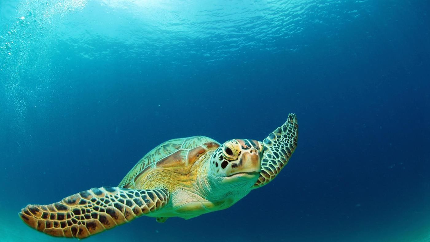 How Do Green Sea Turtles Eat Their Food