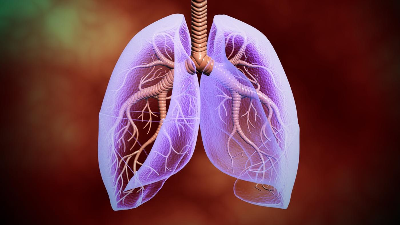 Where Are The Lungs Located In The Human Body Reference