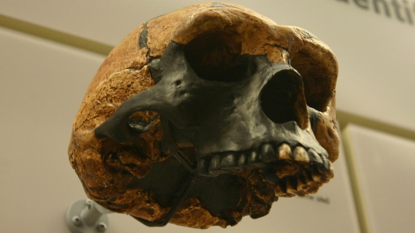 what are the main differences between homo erectus and australopithecus
