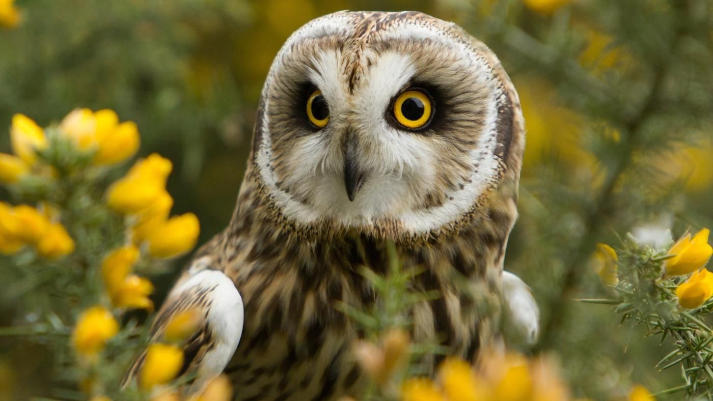 What does it mean when someone sees an owl during the day what does it mean when someone sees an owl during the day reference biocorpaavc Images