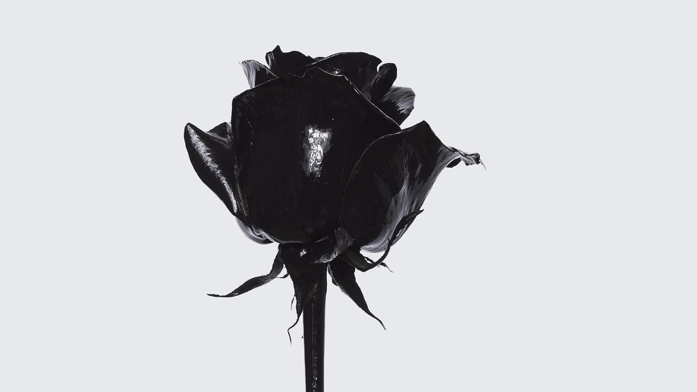 What is the meaning of a black rose reference buycottarizona