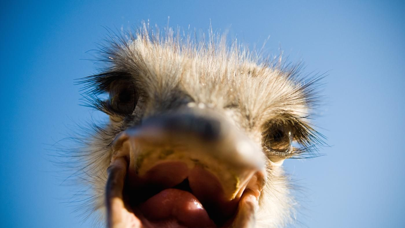 Types Of Food That Ostriches Eat