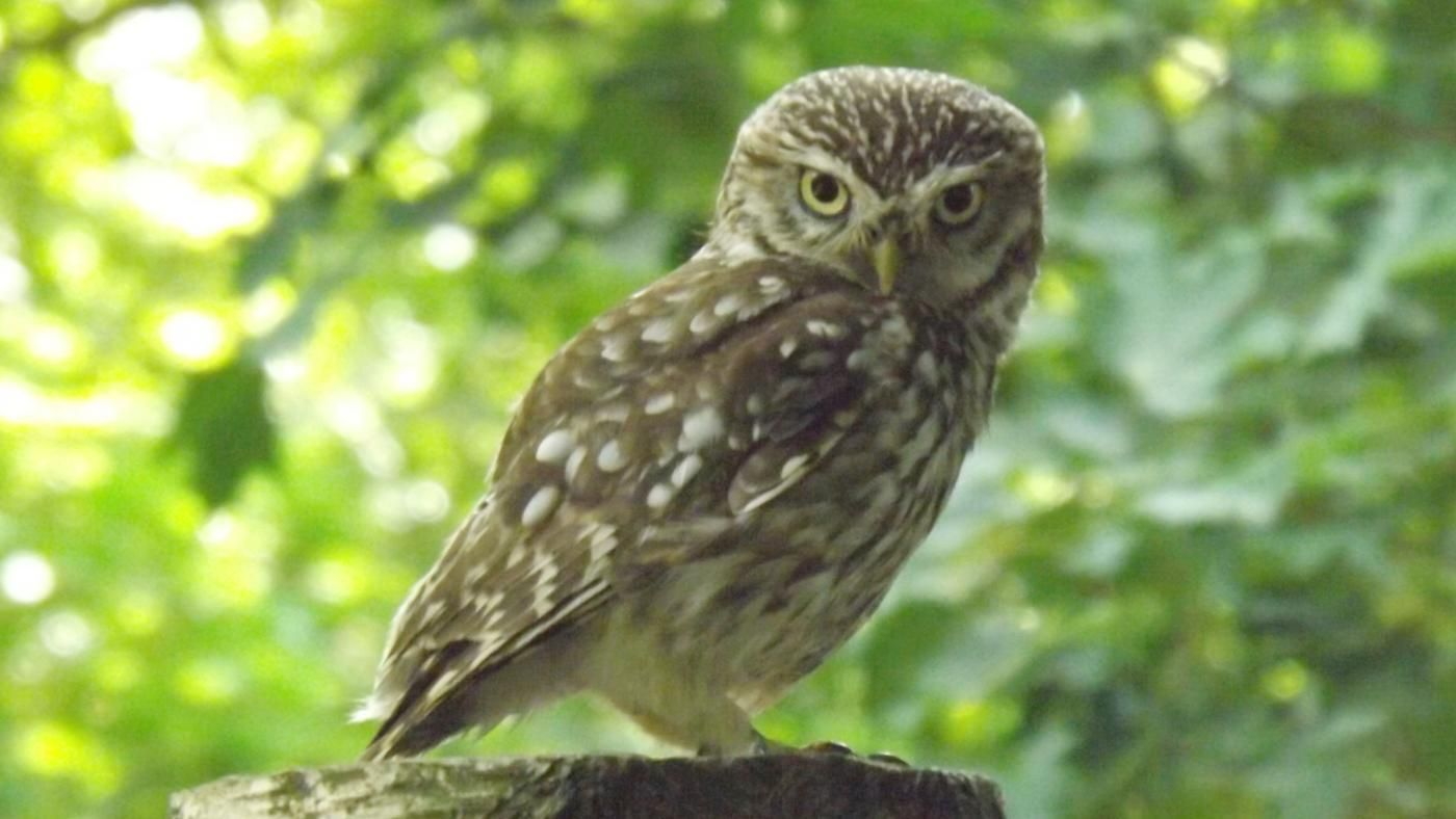 What does the owl symbolize for egyptians reference biocorpaavc