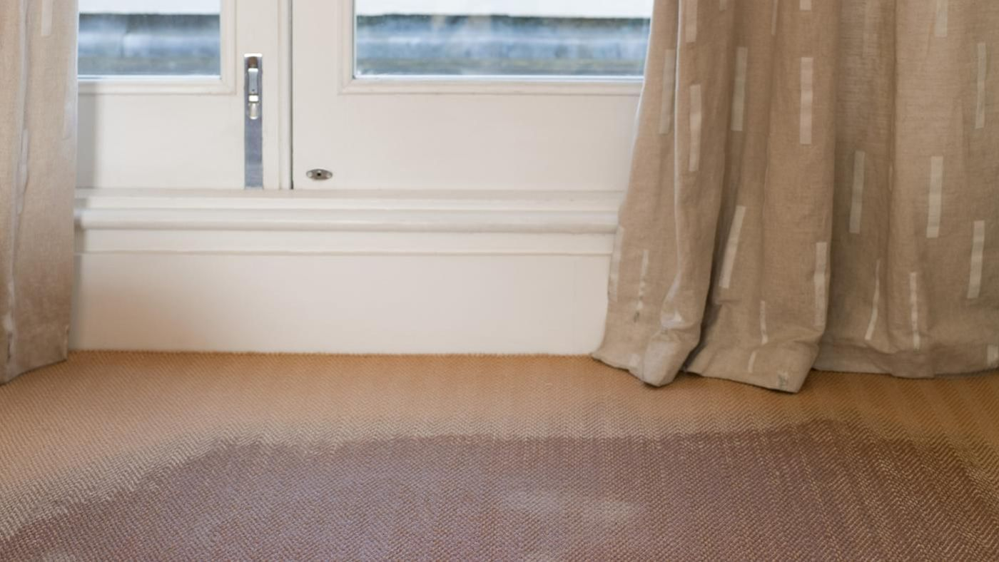 How Do You Remove The Mildew Smell From Carpet