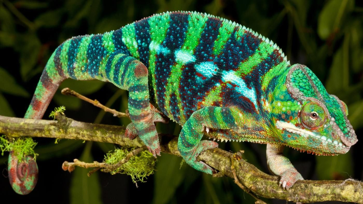 reptiles tropical animals pets reference