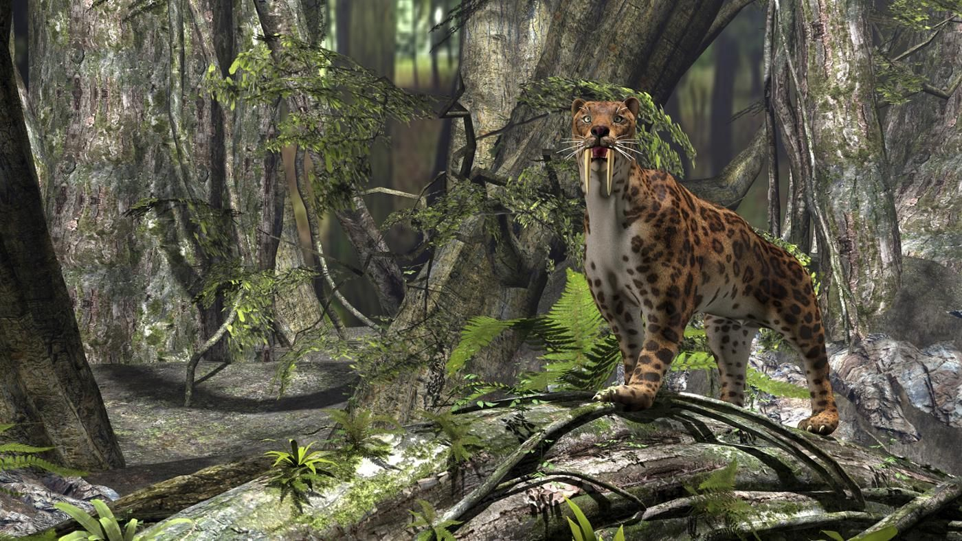 What Are Sabertooth Tiger Facts Reference Com