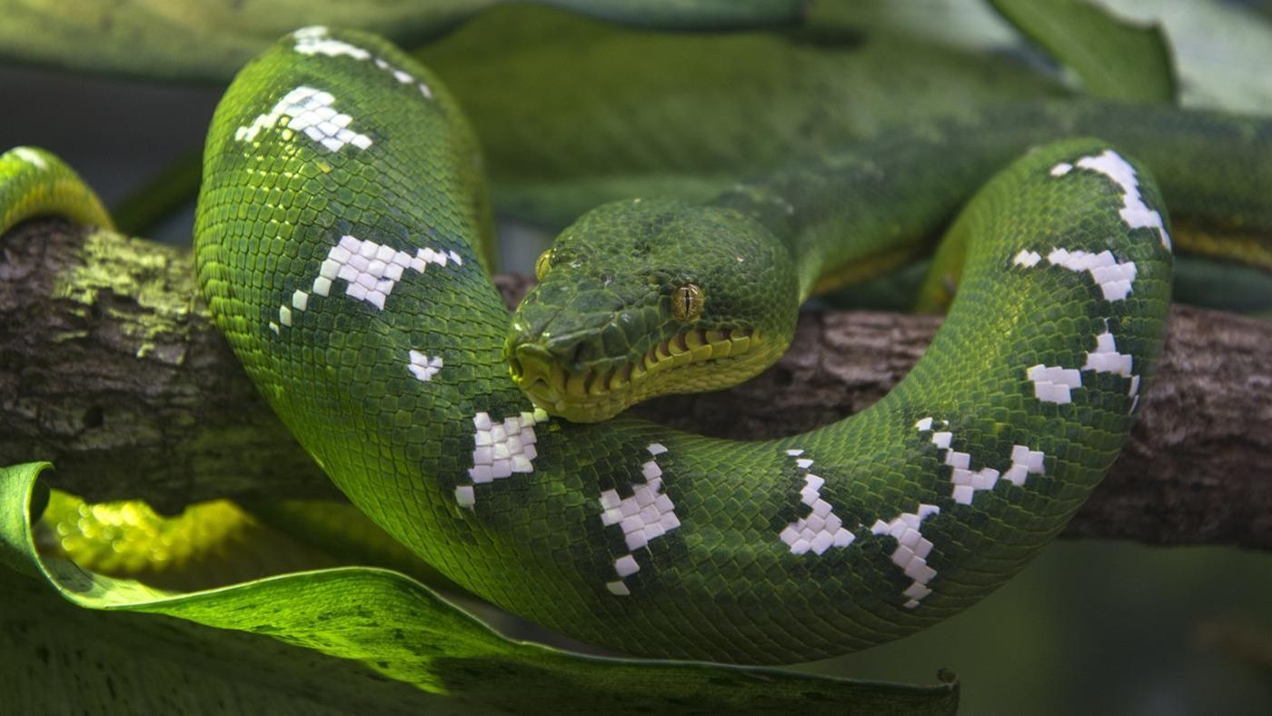 What Is The Scientific Name For A Snake Reference Com
