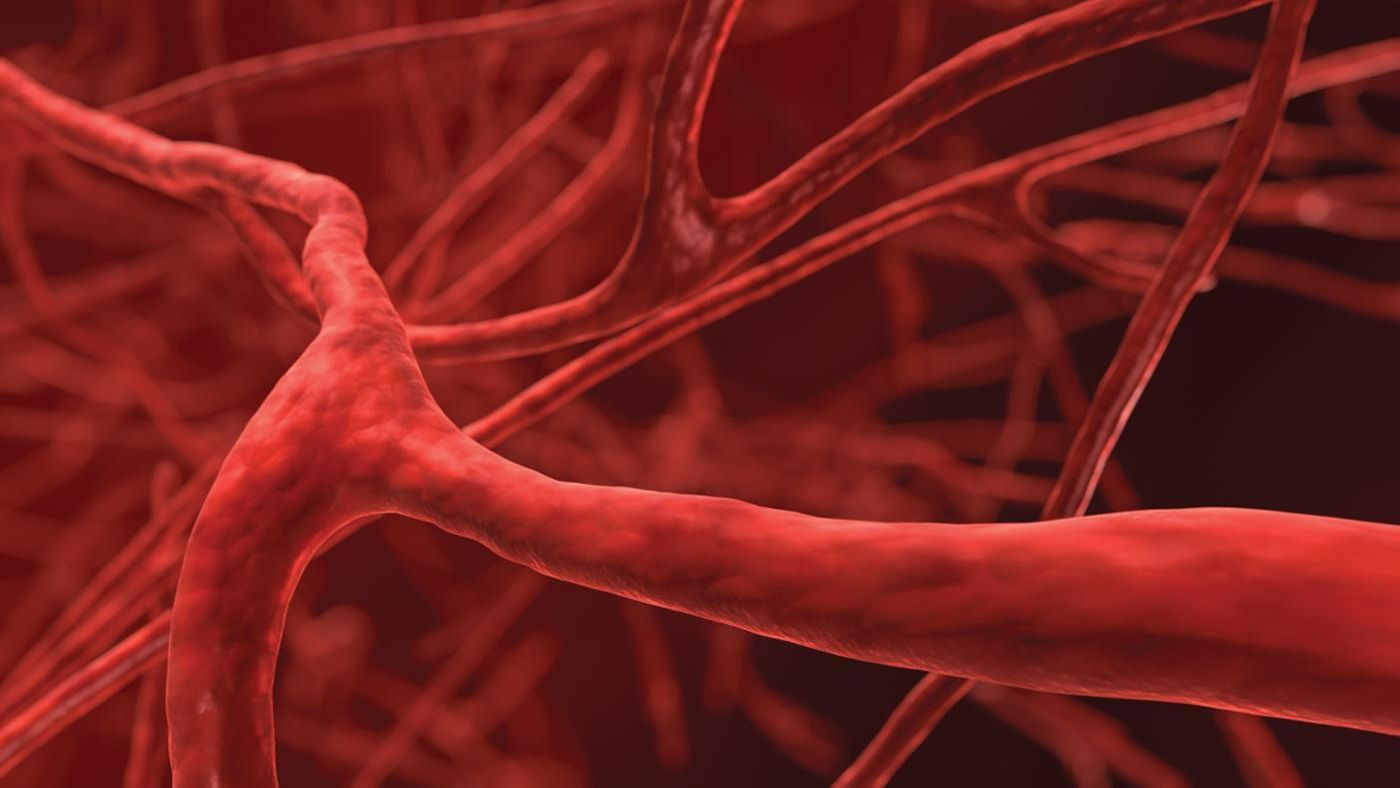 why does blood vessel radius have a larger effect on the body then changes in blood vessel length Known as the body parts that are important to blood circulation, blood vessels have three kinds, namely the veins, the capillaries as well as the arteries the veins are responsible for transporting blood to the heart from the capillaries on the other hand, the capillaries allow the exchange of chemicals as well as water between the tissues and the blood.