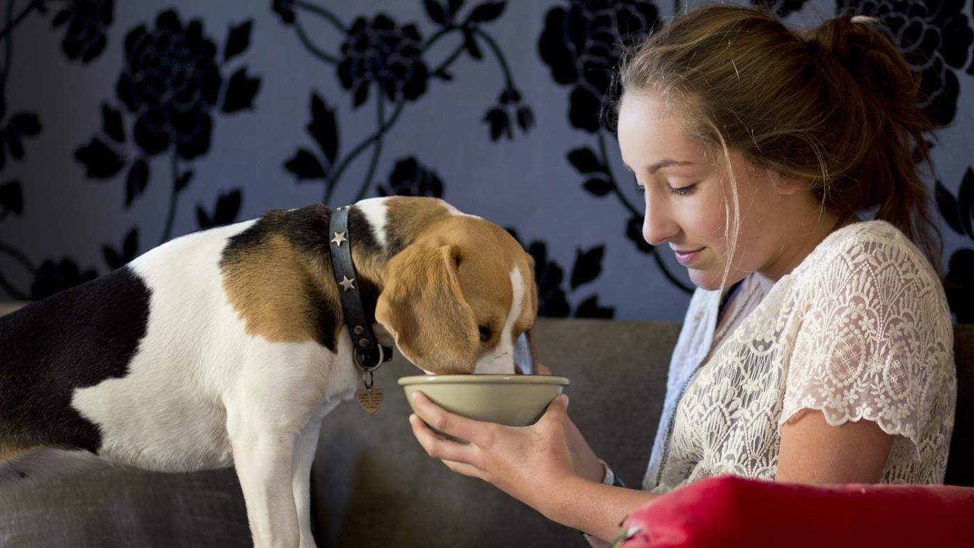 What Should A Dog Eat After Giving Birth