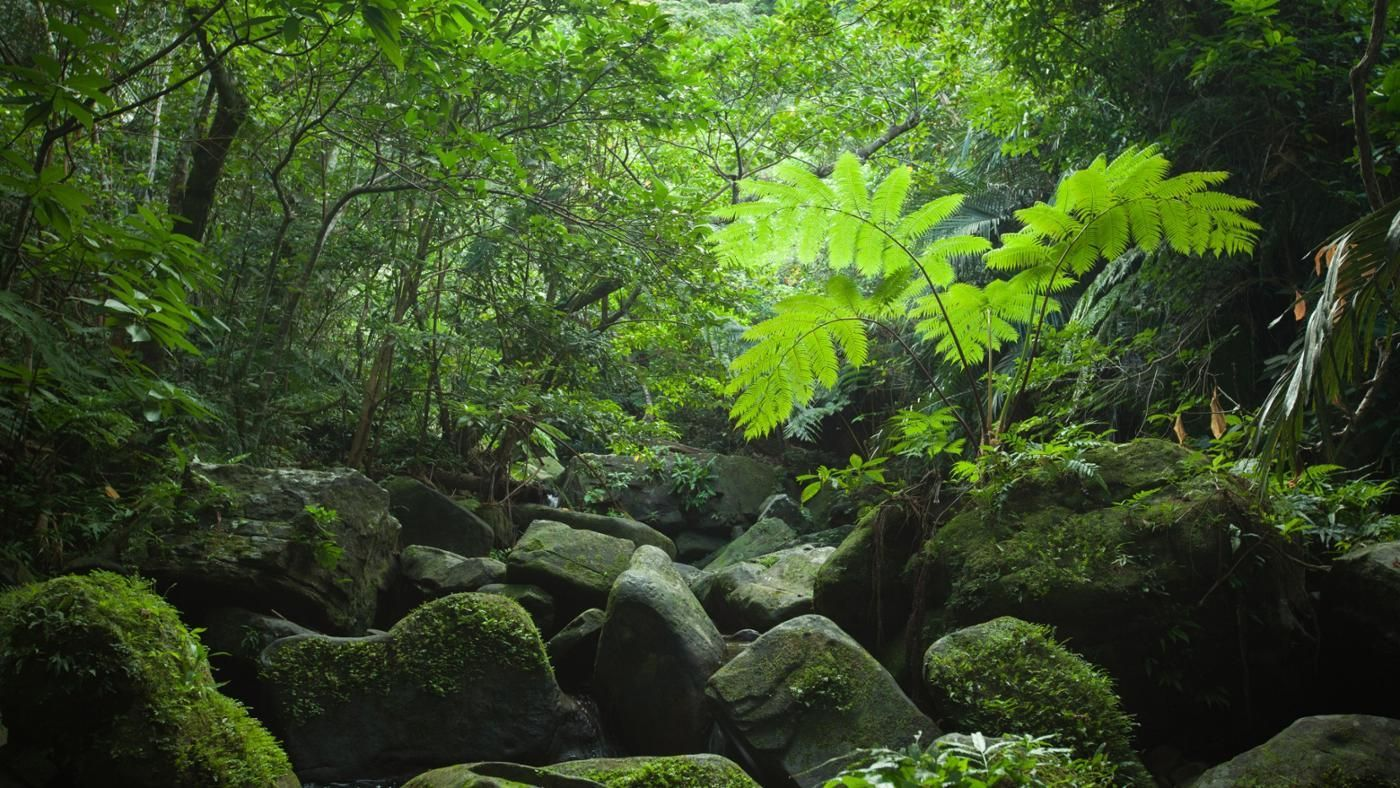 Tropical Island Beach Ambience Sound: What Is The Structure Of The Tropical Rainforest