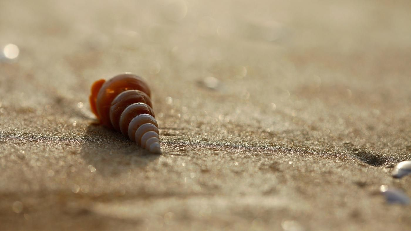 What is the symbolism of seashells reference biocorpaavc Choice Image