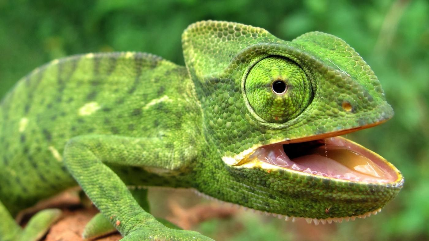 What Type Of Body Covering Do Reptiles Have Reference Com