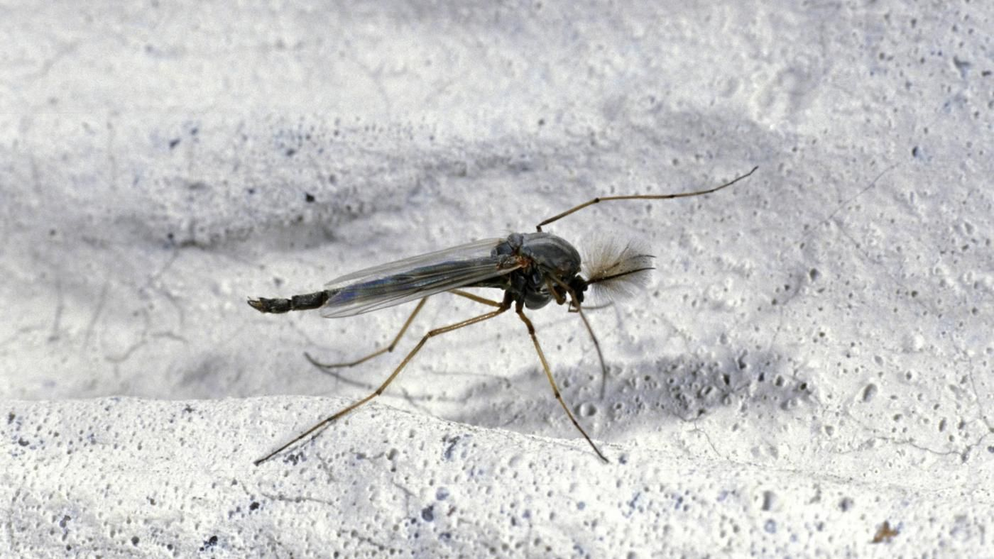 What Causes Gnats? | Reference.com