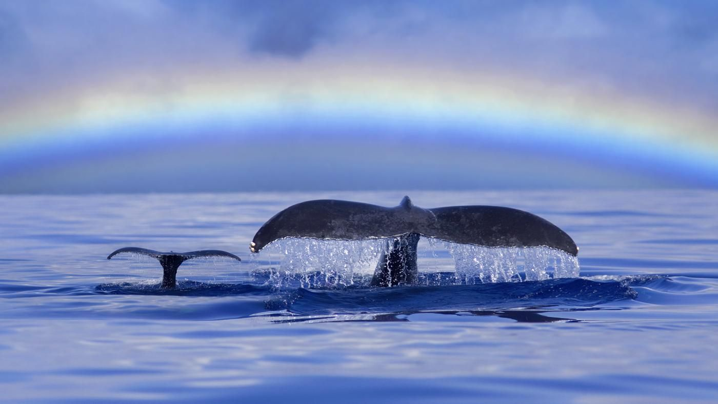 What Do You Call a Baby Whale? | Reference.com
