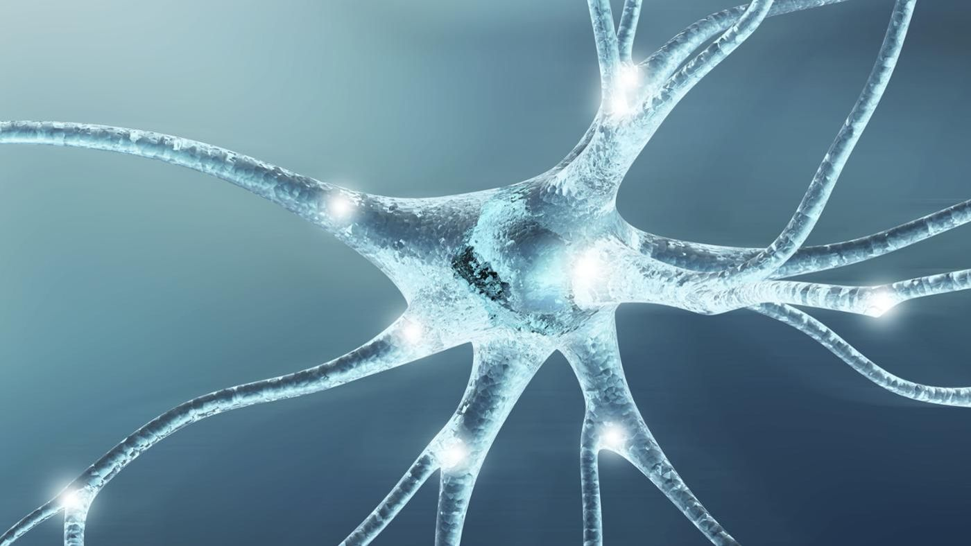What Is the Function of Nerve Cells? | Reference.com